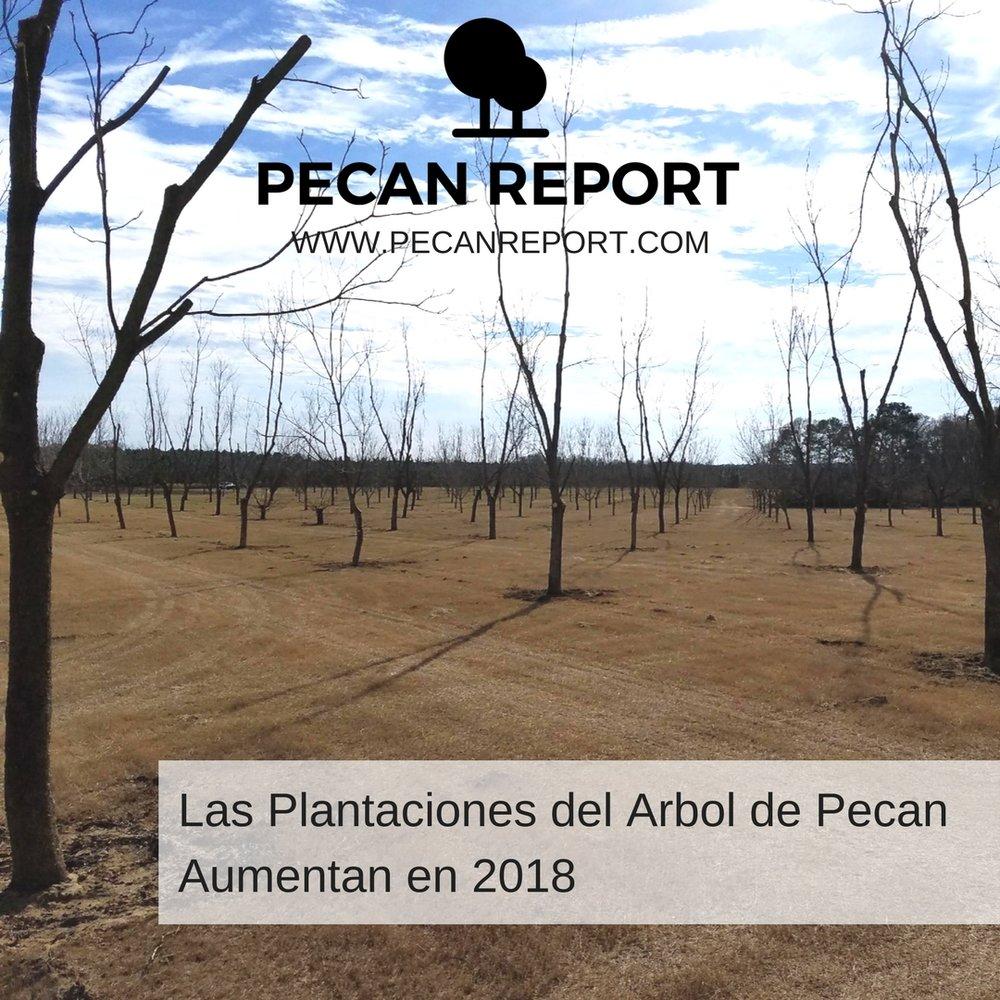 Las Plantaciones del Arbol de Pecan aumentan en 2018.jpg