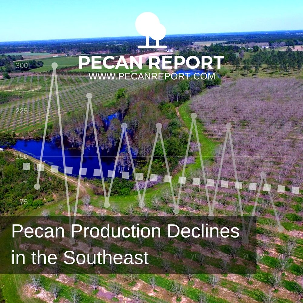 Pecan Production Declines in the Southeast.jpg