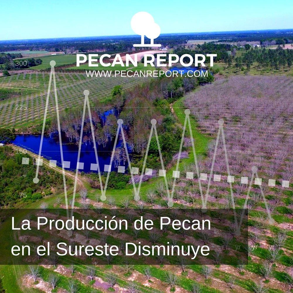 La Producción de Pecan en el Sureste Disminuye.jpg