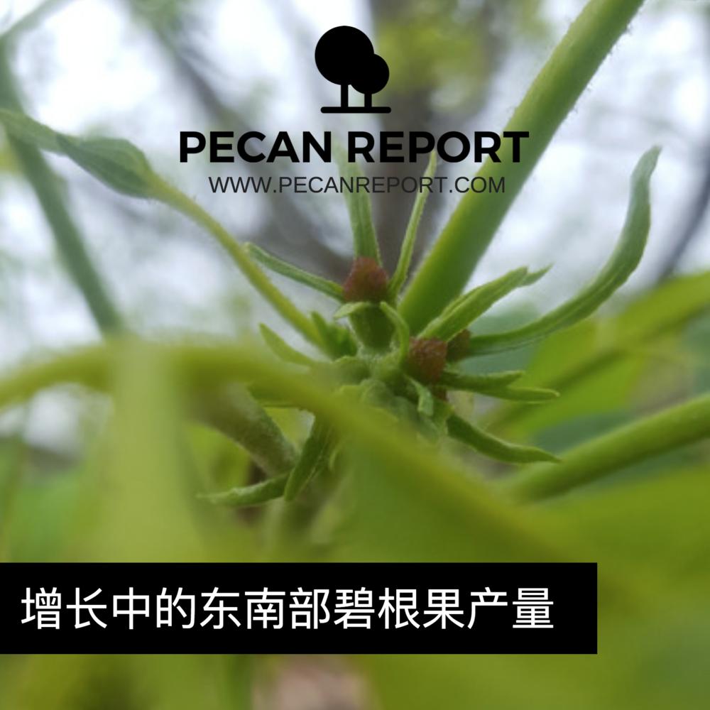 增长中的东南部碧根果产量