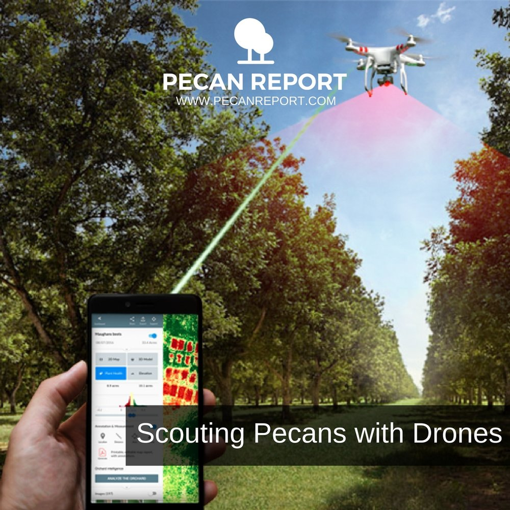 Scouting Pecans with Drones (scab, mites, nutcase bearer, aphids, ect..).jpg