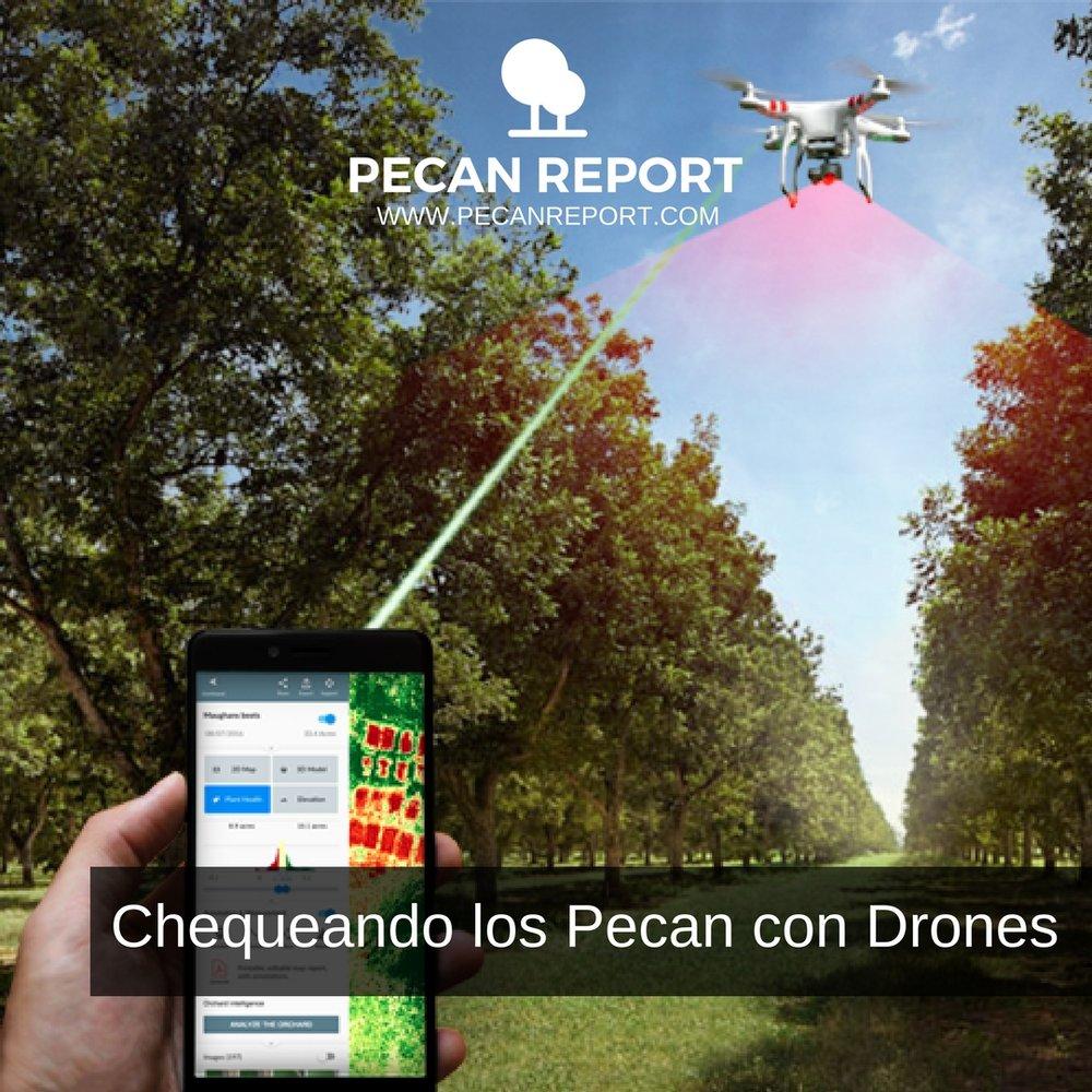 Chequeando los Pecan con Drones (scab, mites, nutcase bearer, aphids, ect..).jpg