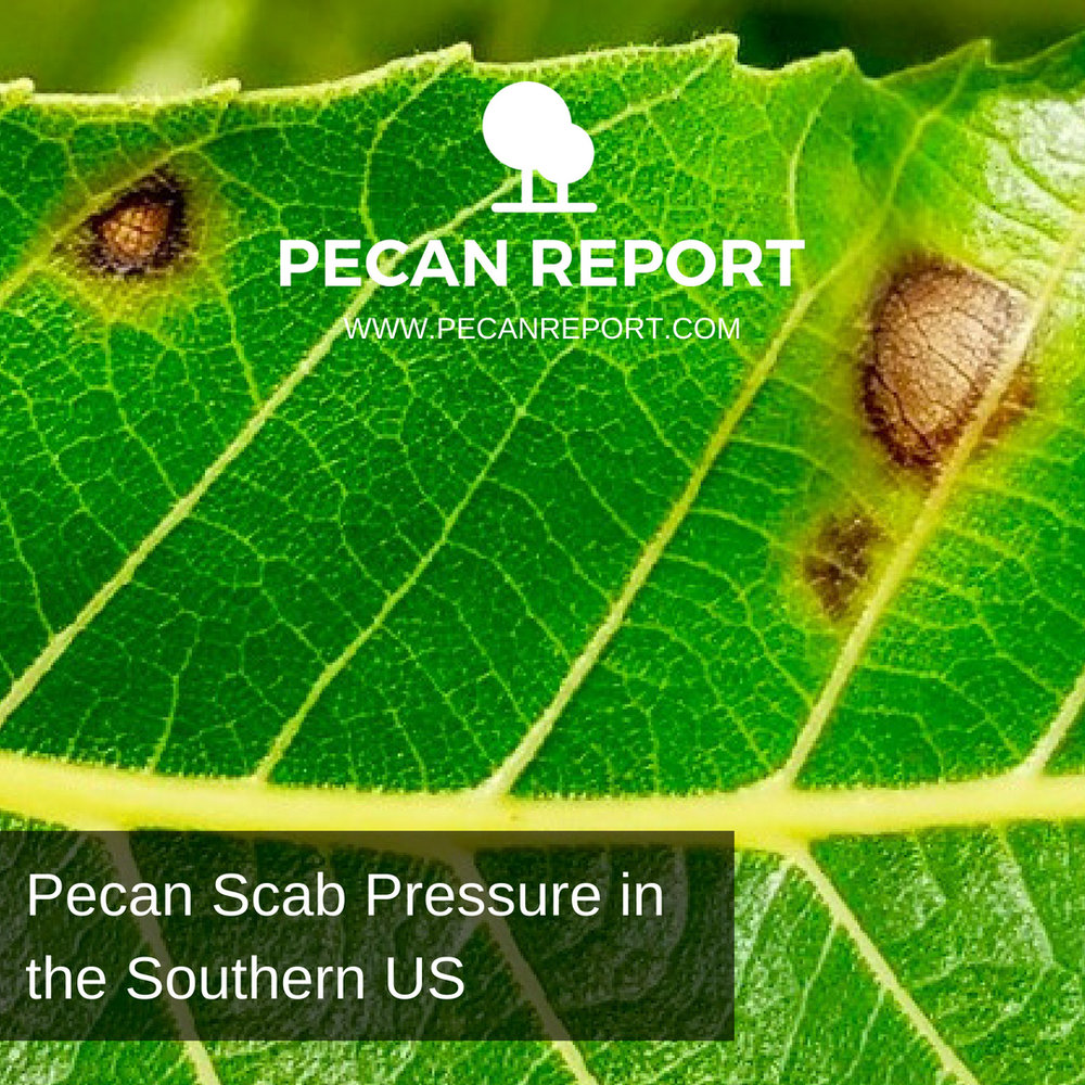 Pecan Scab Pressure Increases in the Southeastern US.jpg