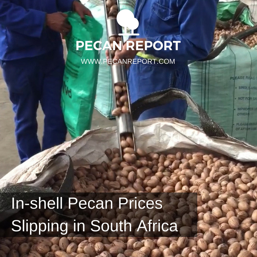 In-shell Pecan Prices Slipping in South Africa.jpg