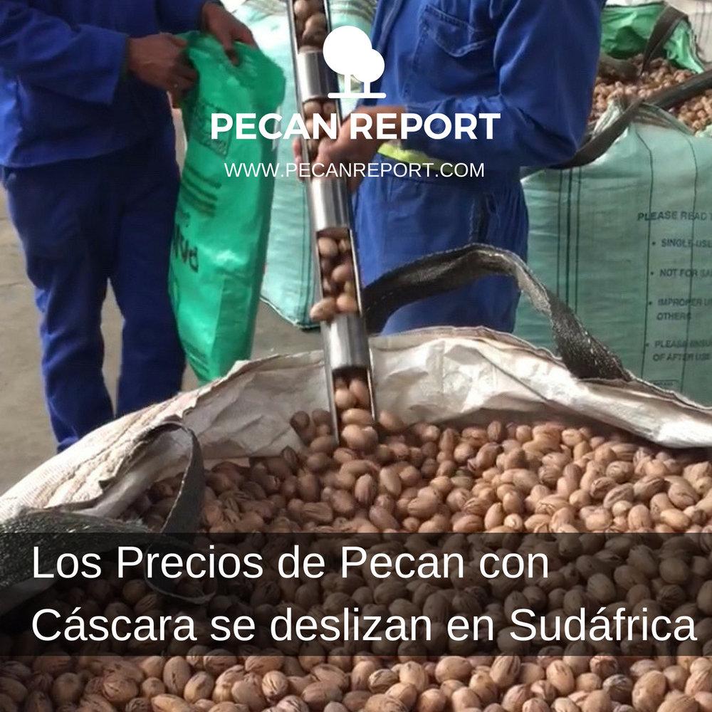Los Precios de Pecan con cáscara se deslizan en Sudáfrica.jpg