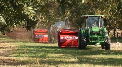 Pecan Farming