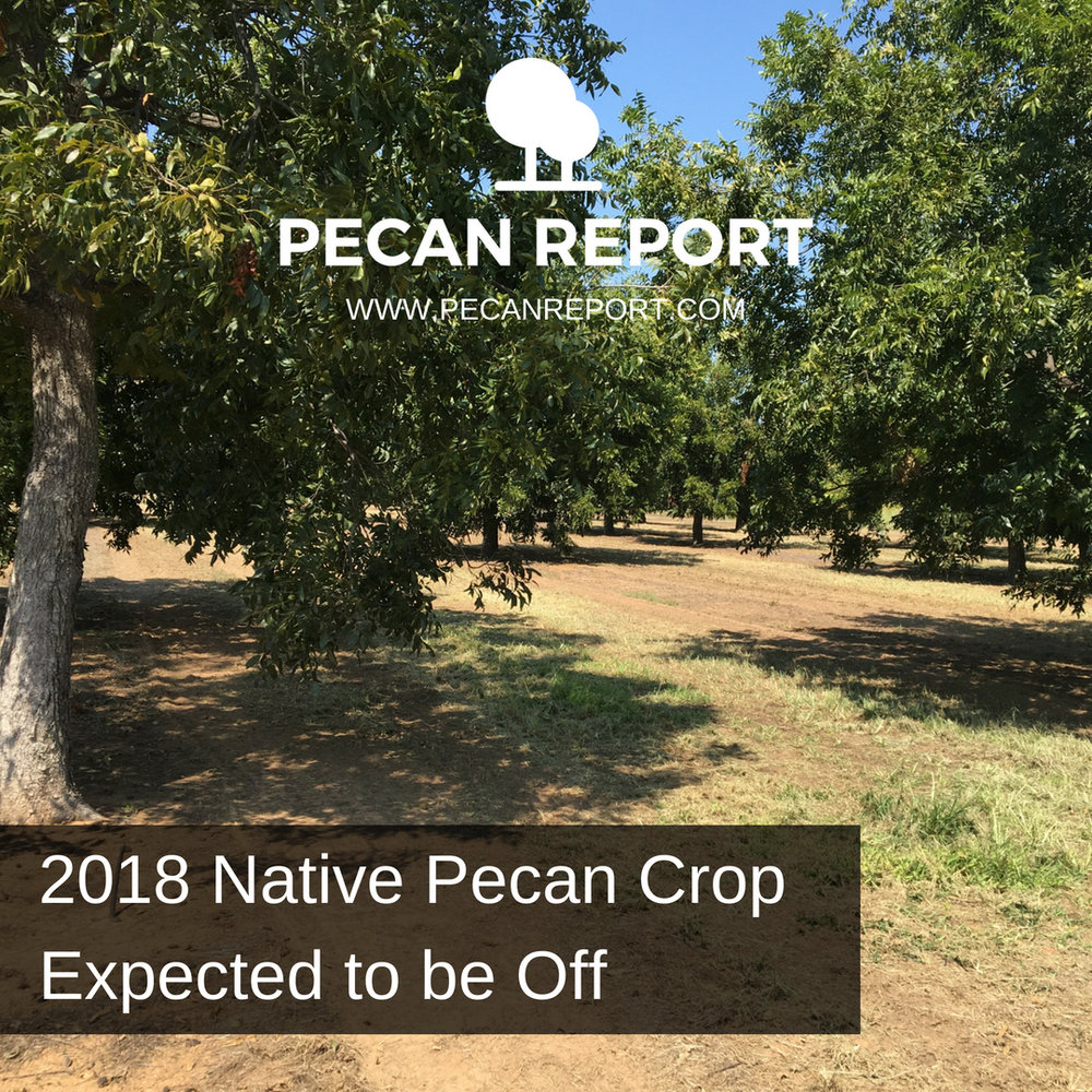 2018 Native Pecan Crop Expected to be Off Texas Pecans, Oklahoma Pecans.jpg