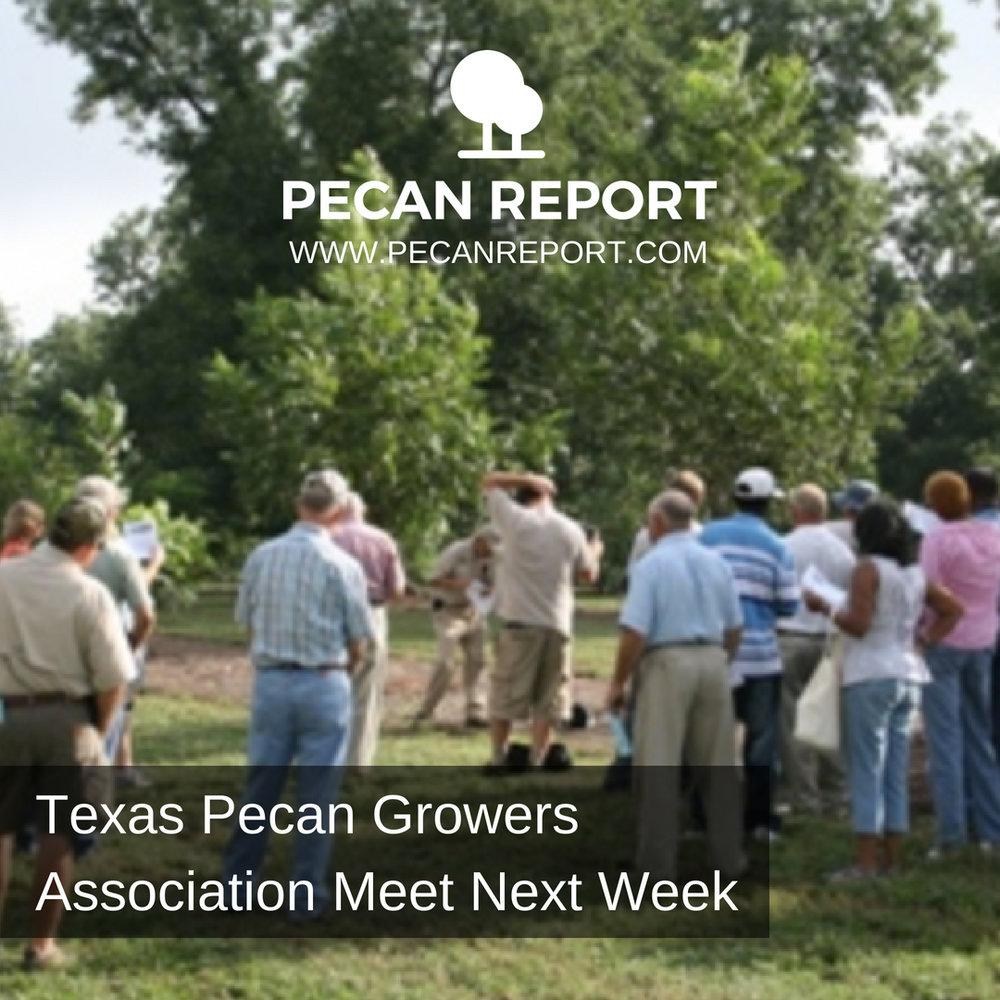 Texas Pecan Growers Association Meet Next Week.jpg