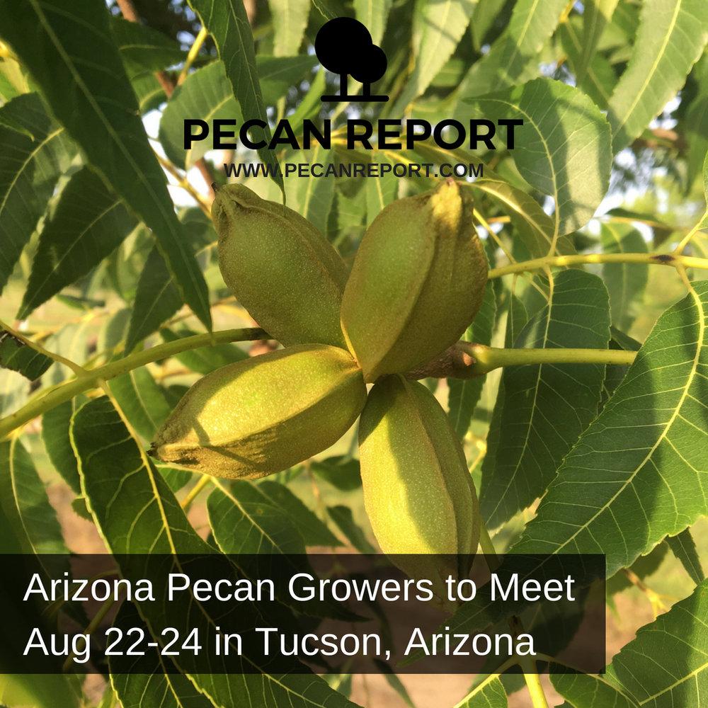 Arizona Pecan Growers Association to Meet Aug 22-24 in Tucson, Arizona.jpg