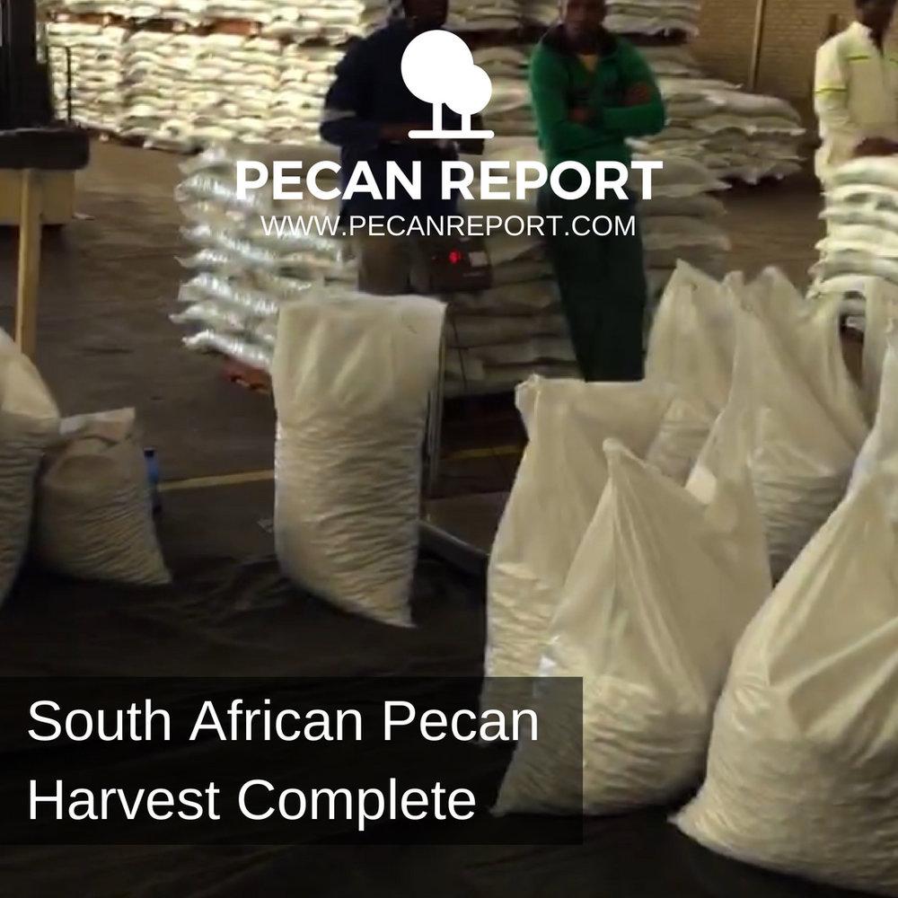 South African Pecan Harvest Complete.jpg