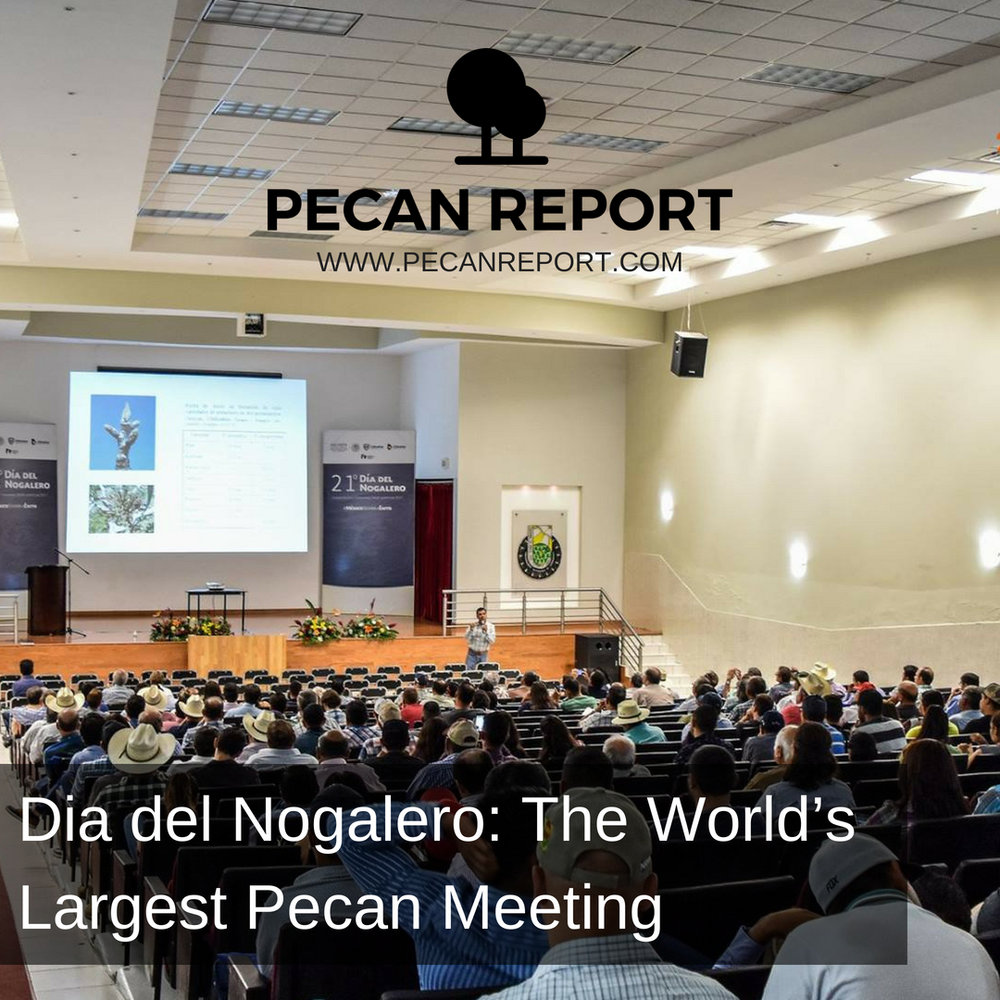 Dia del Nogalero_ The World's Largest Pecan Meeting.jpg