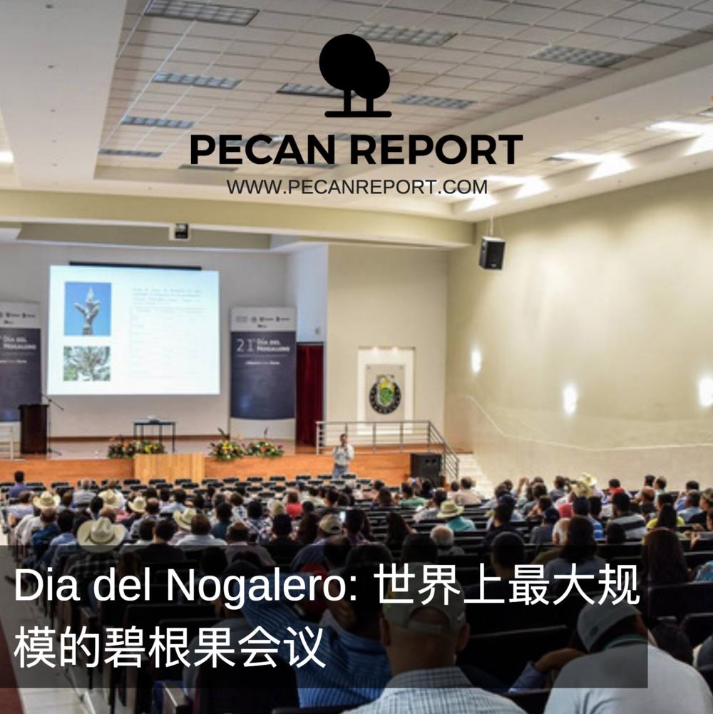 Dia del Nogalero: 世界上最大规模的碧根果会议