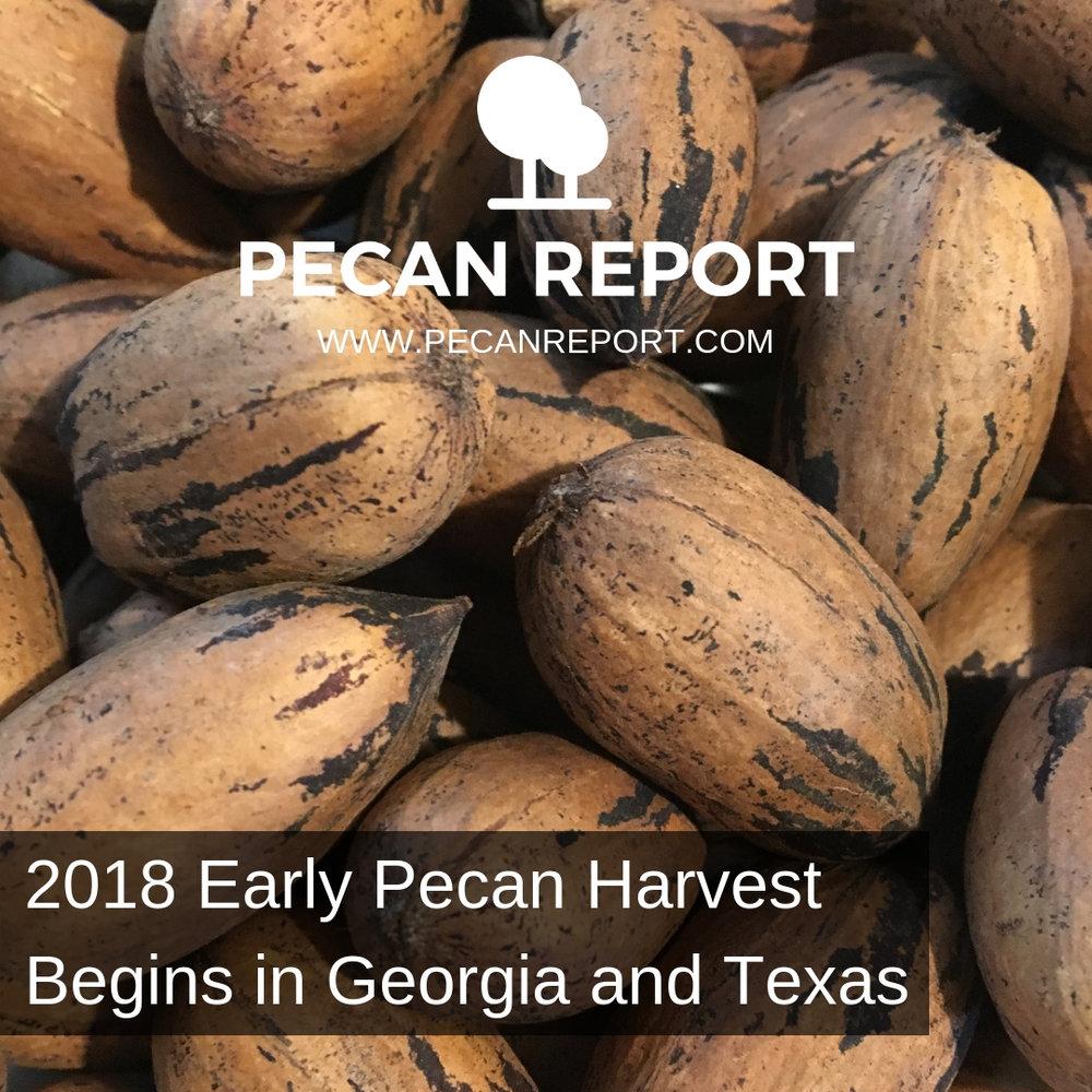 2018 Early Pecan Harvest Begins in Georgia and Texas.jpg