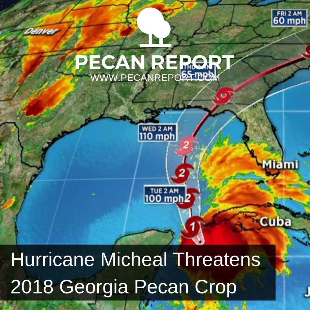 hurricane michael threatens 2018 georgia pecan crop pecan report