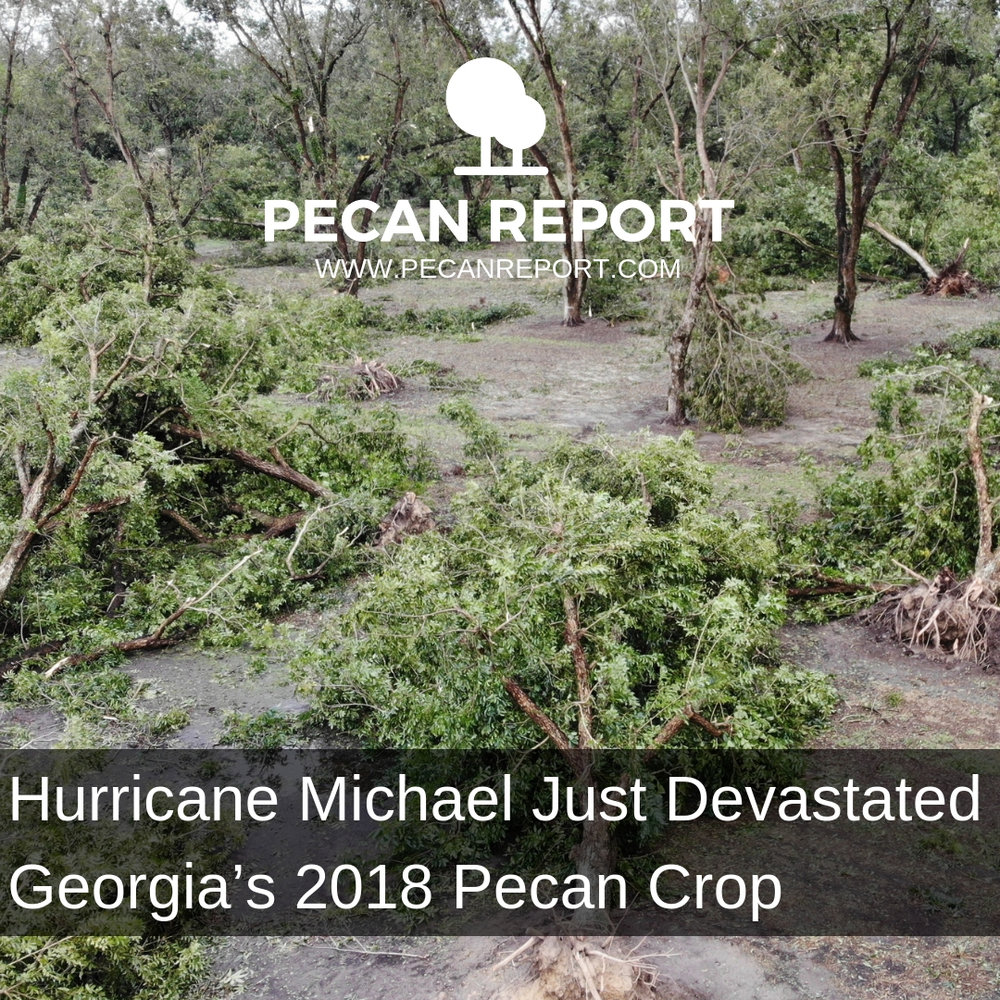 Hurricane Michael Just Devastated Georgia's 2018 Pecan Crop.jpg
