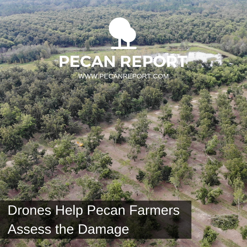 Drones Help Pecan Farmers Assess the Damage.jpg