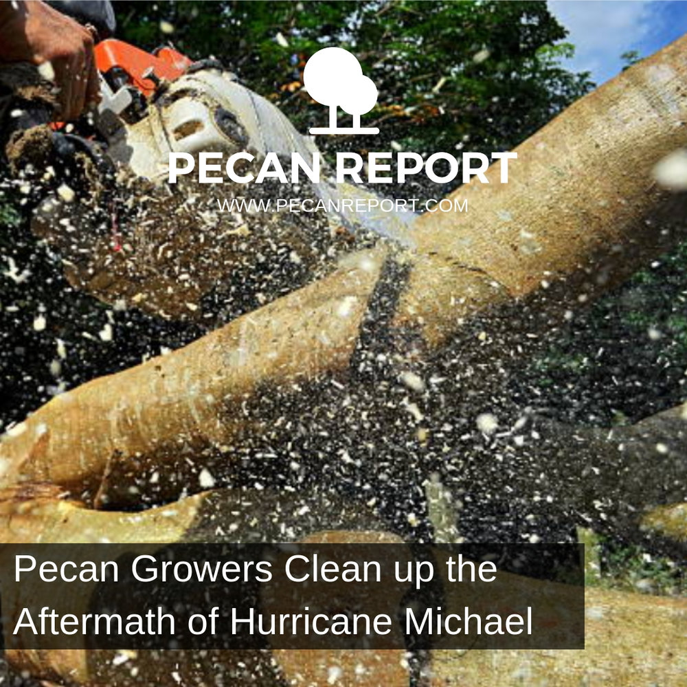 Pecan Growers Clean up the Aftermath of Hurricane Michael - Orchard.jpg