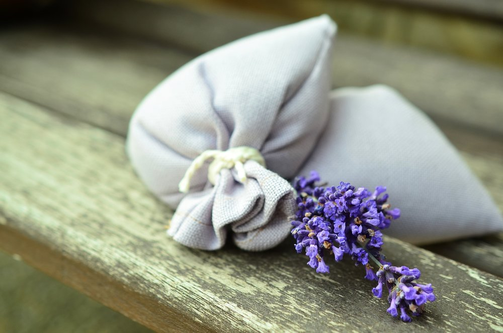 lavender-823584_1920.jpg