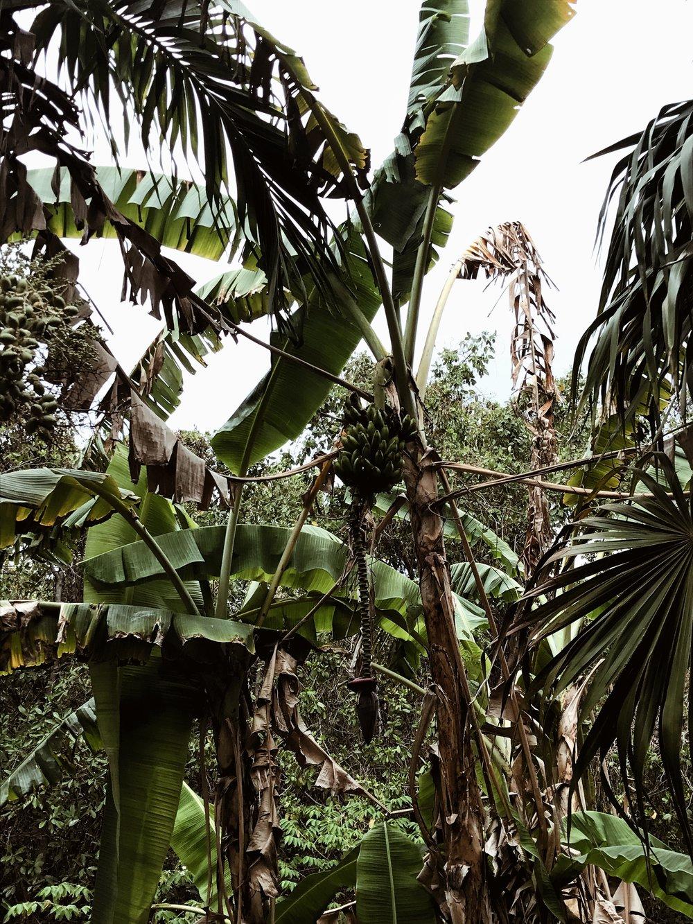 Tulum Photo Diary -