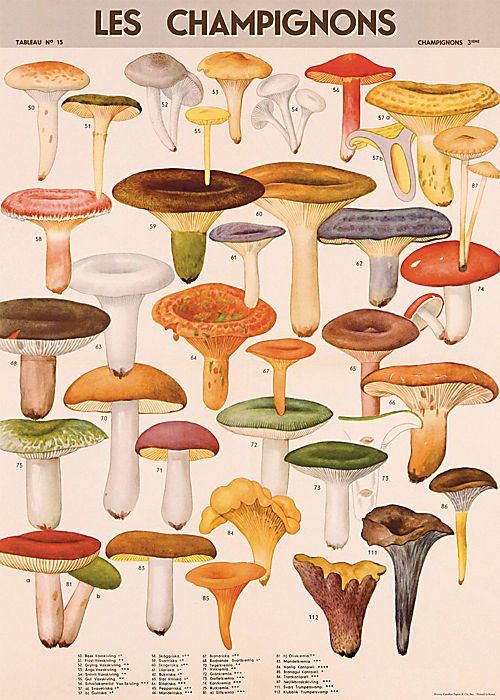 Cavallini Mushrooms Wrapping Paper at Paper Source