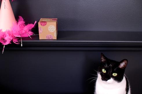 Glitter-Dot Box with cat
