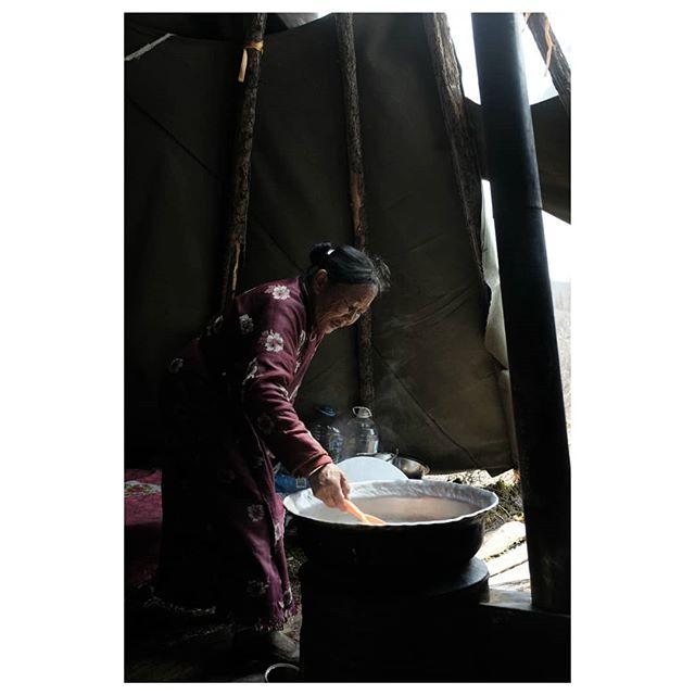 sutei tsei . zaya's auntie prepares the number one staple in the tsataan diet: sutei tsei (salty milk tea) and bread. with reindeer milk, of course . #teepeelife #therealnomads #reindeerherder #tsataan #tuvan #nomads #centralasia #taiga #northernmongolia #mongolia
