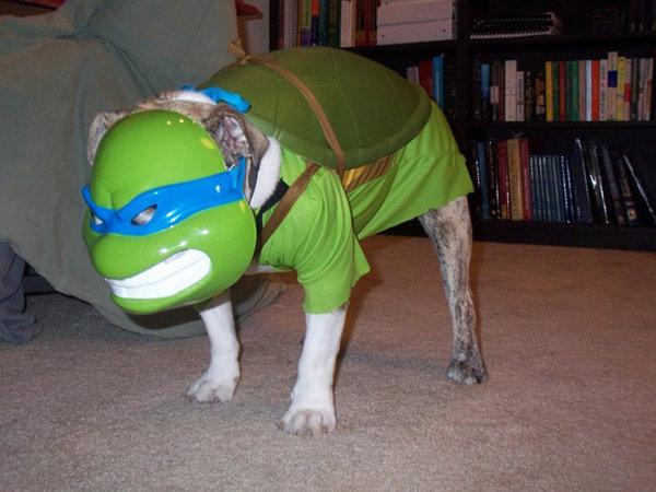 Teenage-Mutant-Ninja-Turtles-Dog-Cosplay