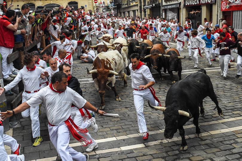 Bulls in action.jpg