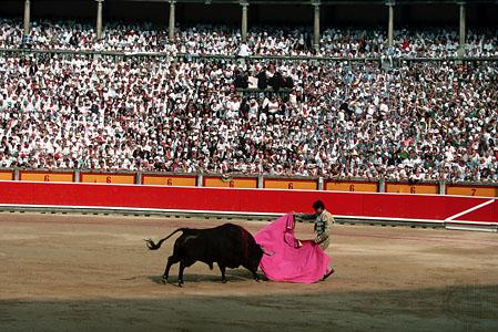 bull fight.jpg