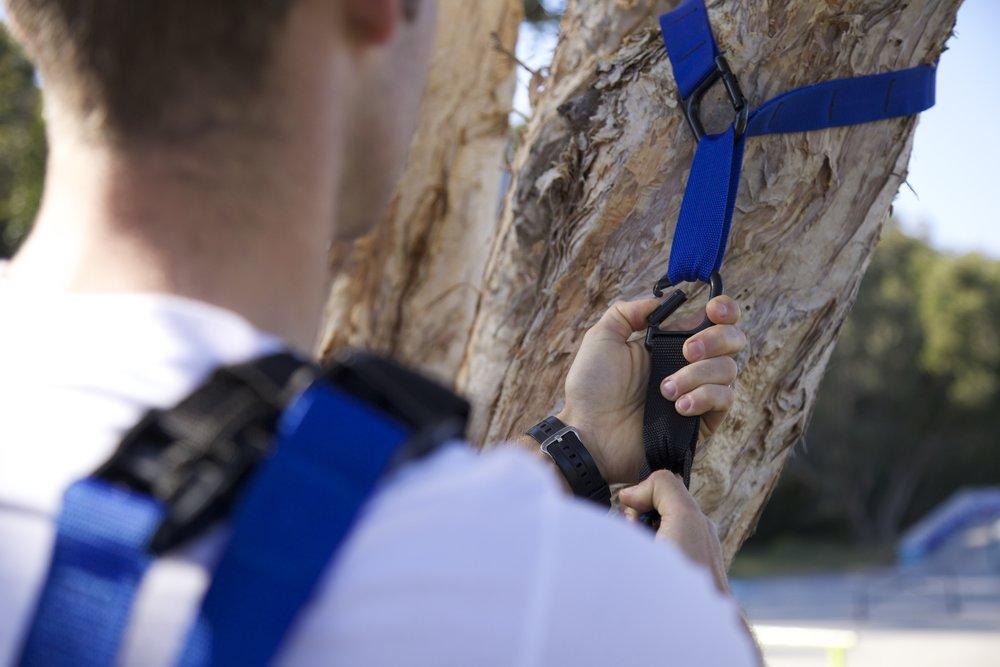 straps on tree.jpg