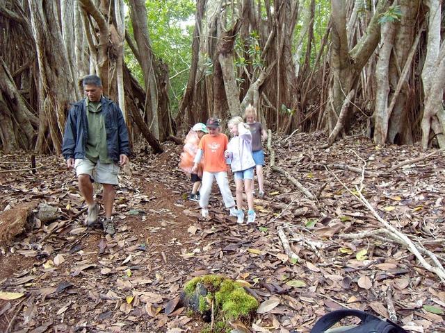 kapalua-hike-roots-are-a-trampoline-.jpg