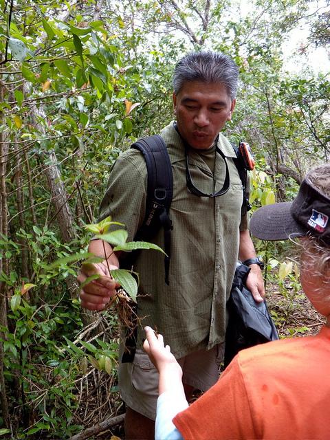 learn-about-the-native-plants-on-kapalua-hike.jpg