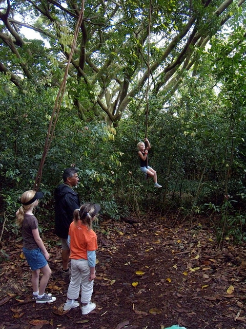 tree-swings-on-a-hike-kapalua.jpg
