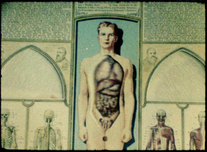 Natural History (1986)