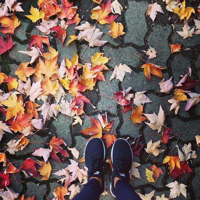 It's Fall 🍁