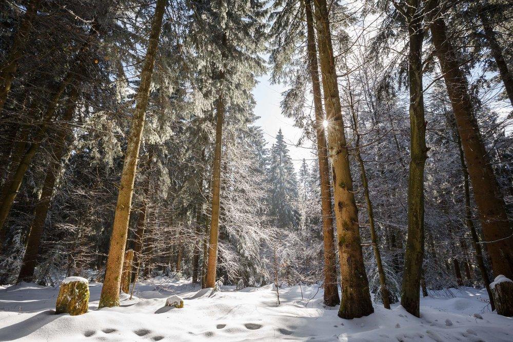 150228_winter_galerie_14.jpg