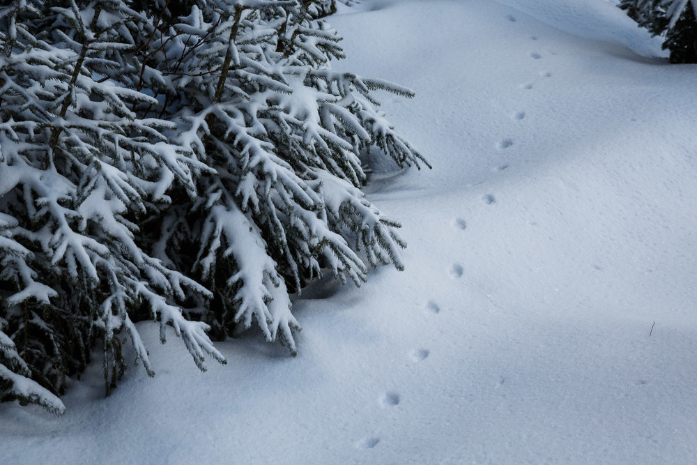 150228_winter_galerie_16.jpg