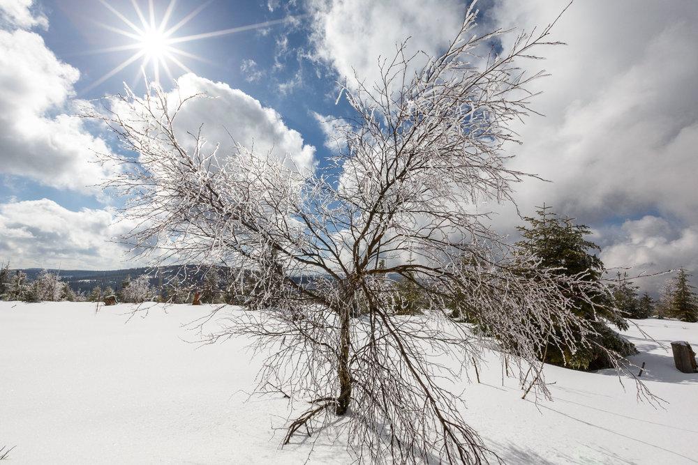 150228_winter_galerie_24.jpg