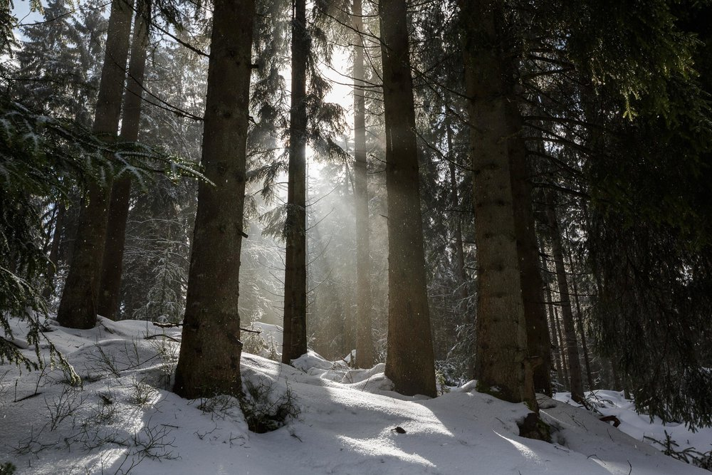 150228_winter_galerie_29.jpg