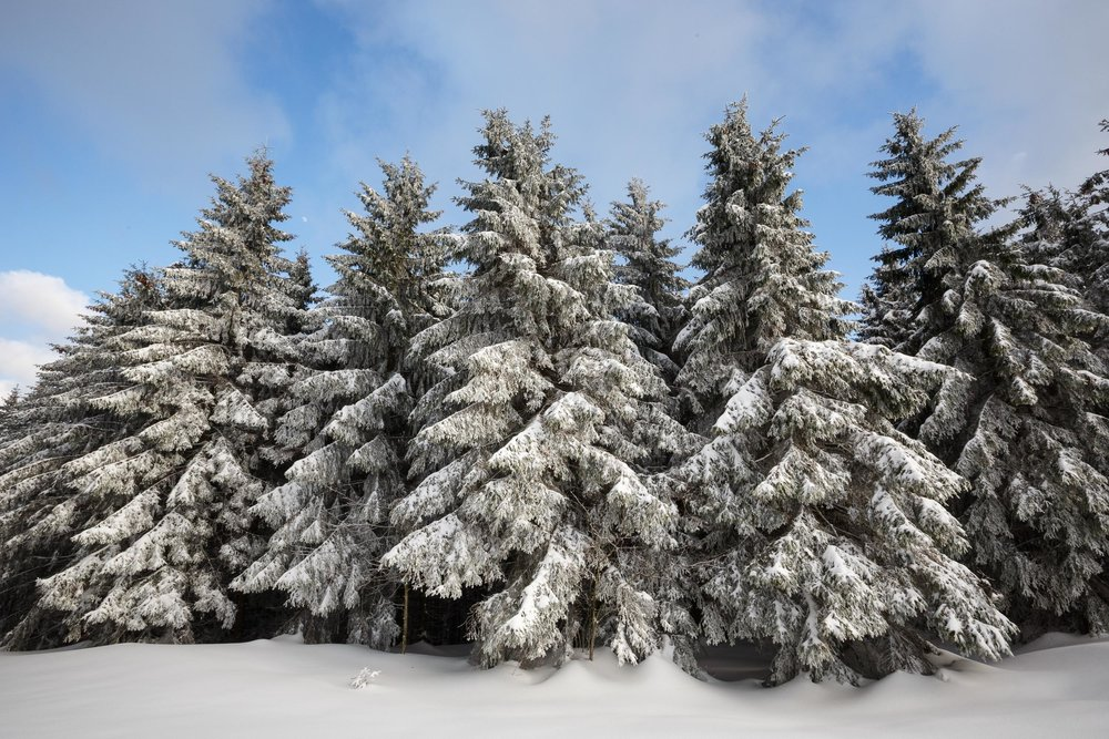 150228_winter_galerie_34.jpg