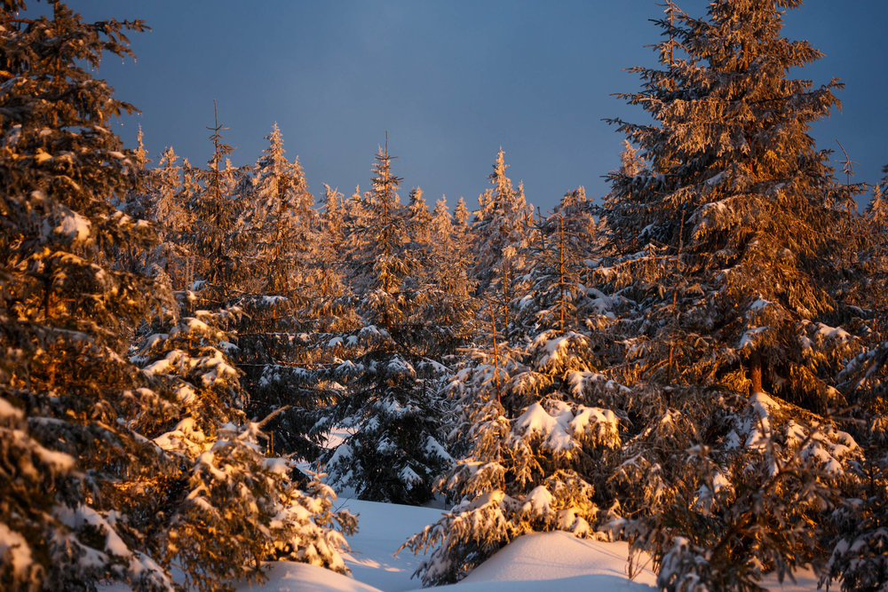 150228_winter_galerie_41.jpg