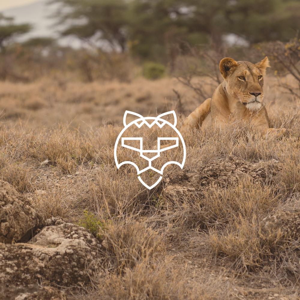 The Lion Logo - Apollo Creative Co - Hampshire Graphic Design