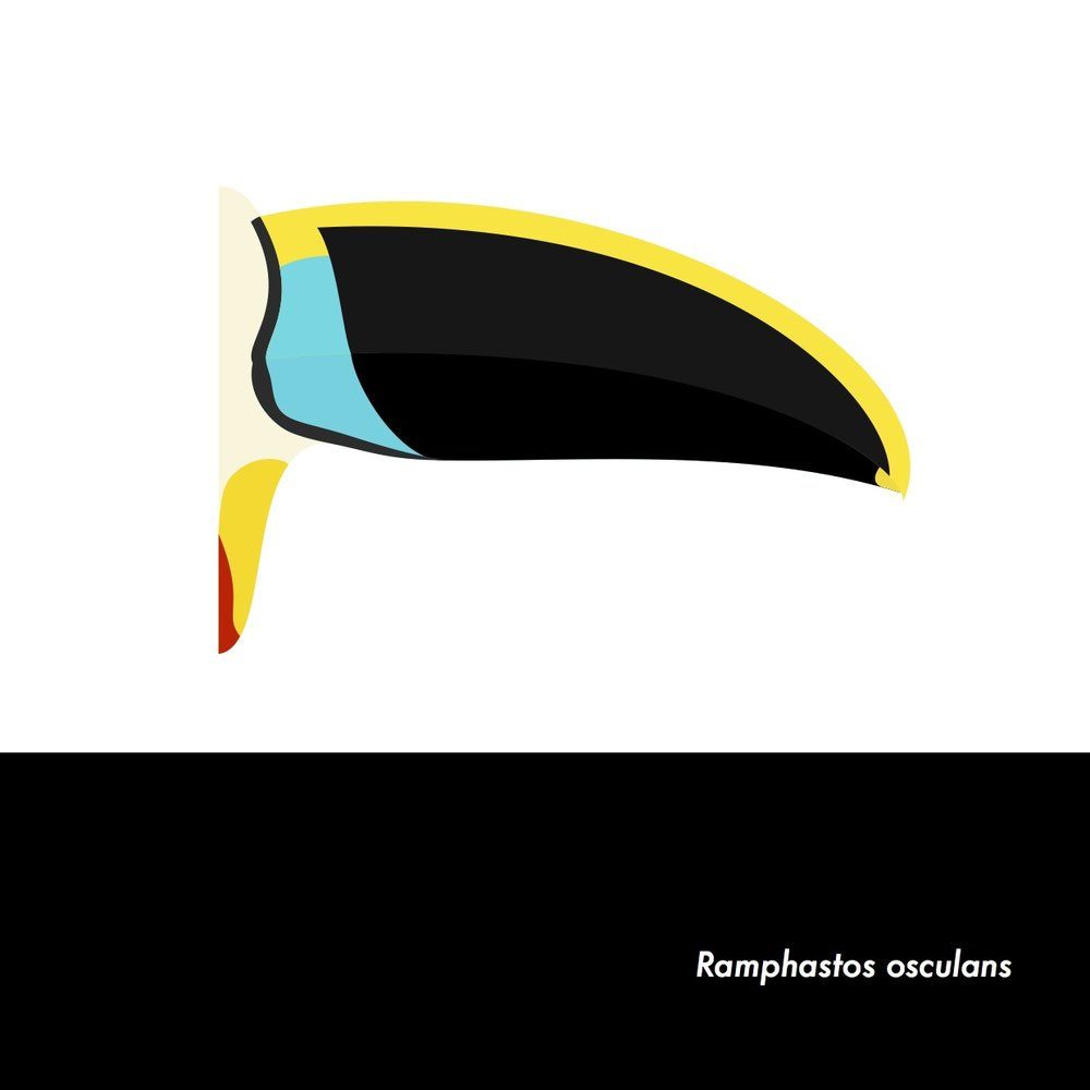 10-RamphastosOsculans.jpeg