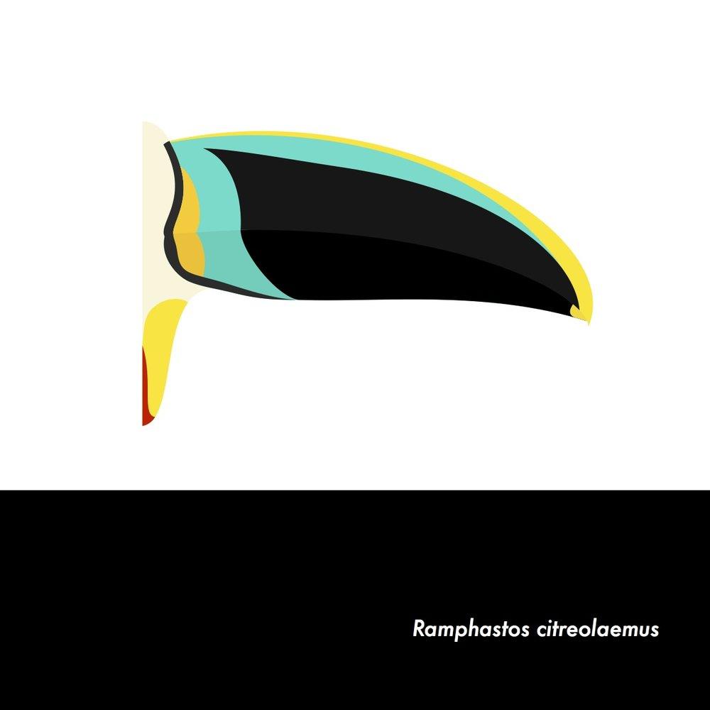 09-RamphastosCitreolaemus.jpeg