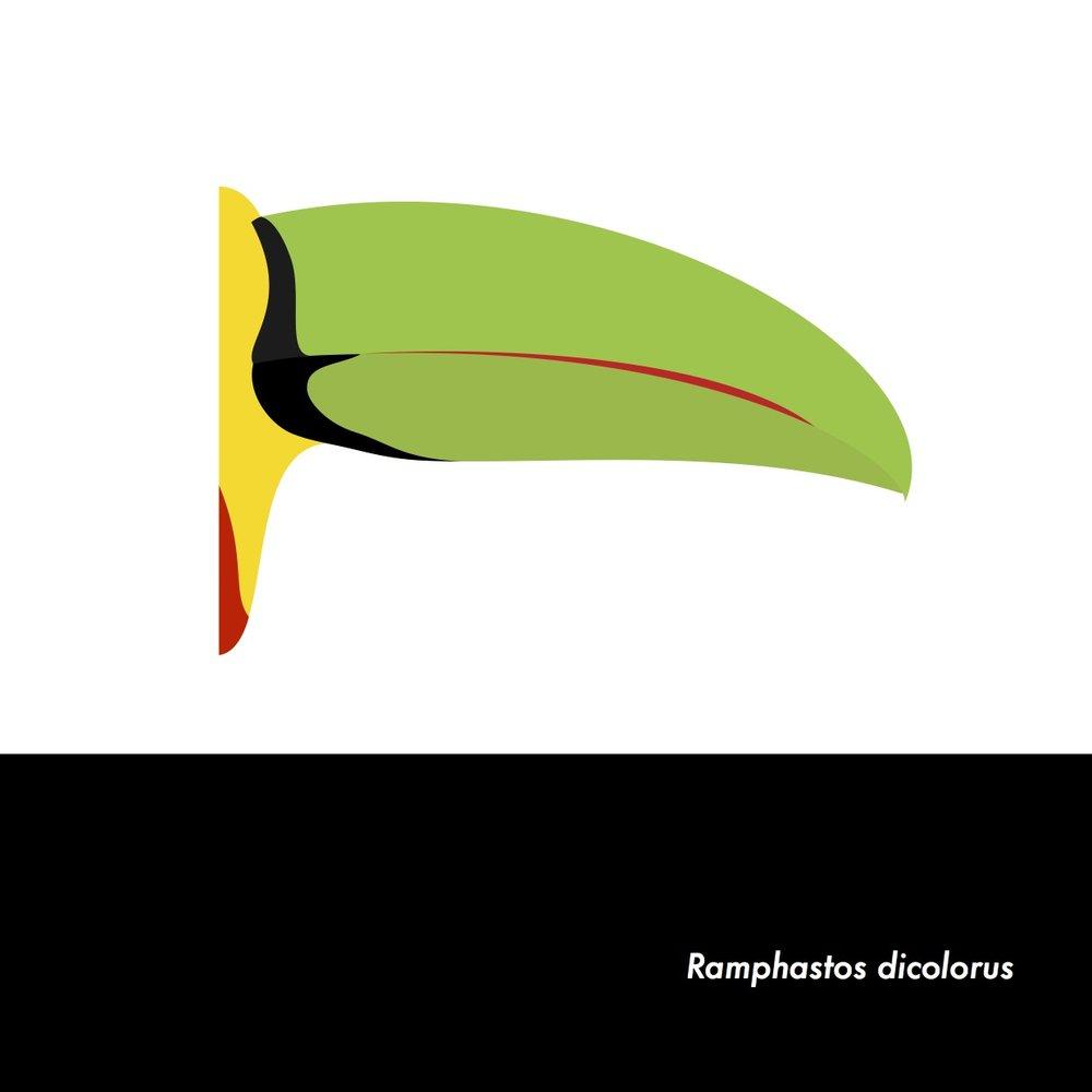 14-RamphastosDicolorus.jpeg