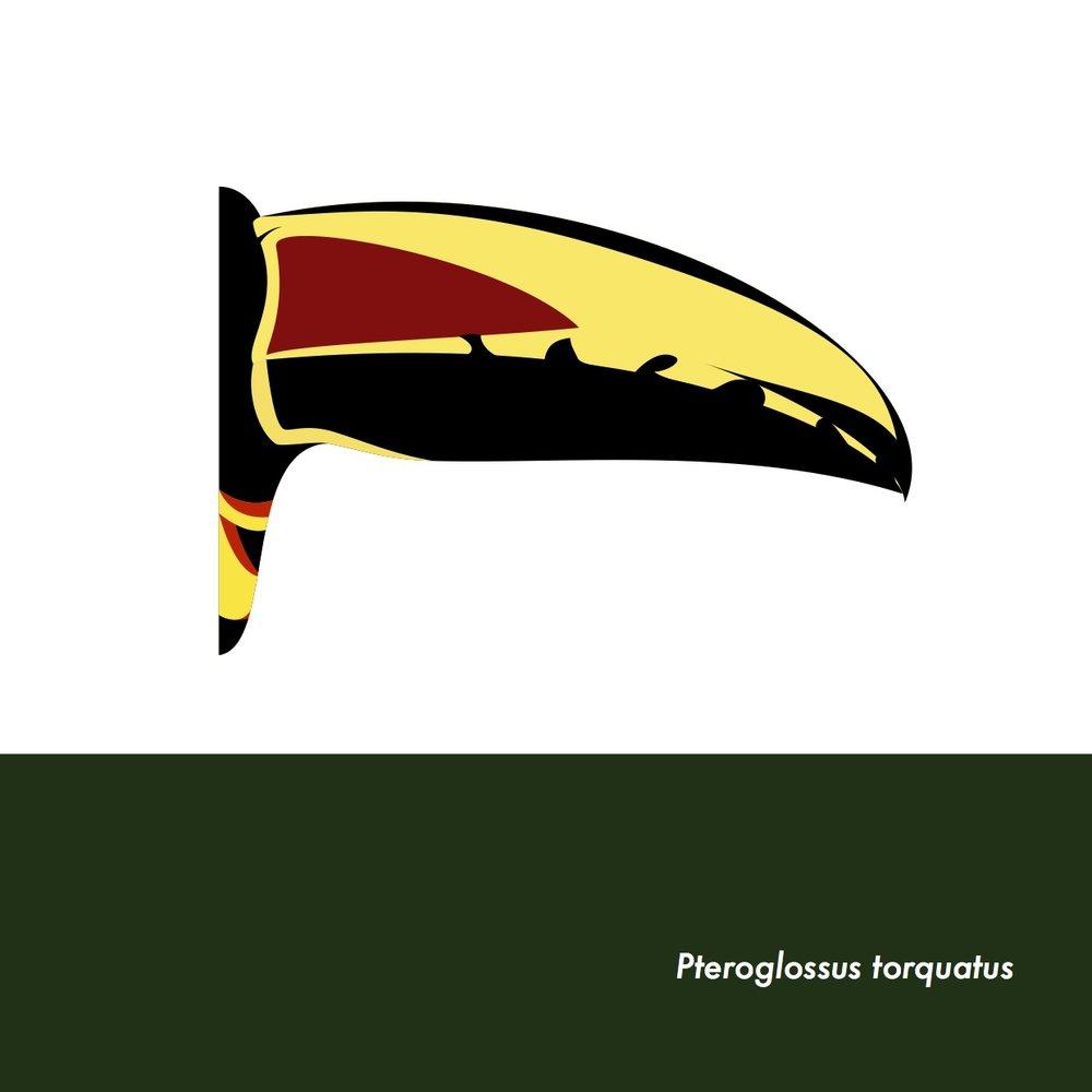 20-PteroglossusTorquatus.jpeg