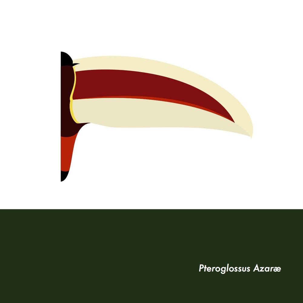 28-PteroglossusAzarae.jpeg