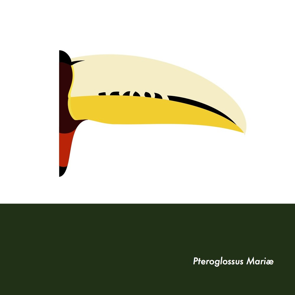 30-PteroglossusMariae.jpeg