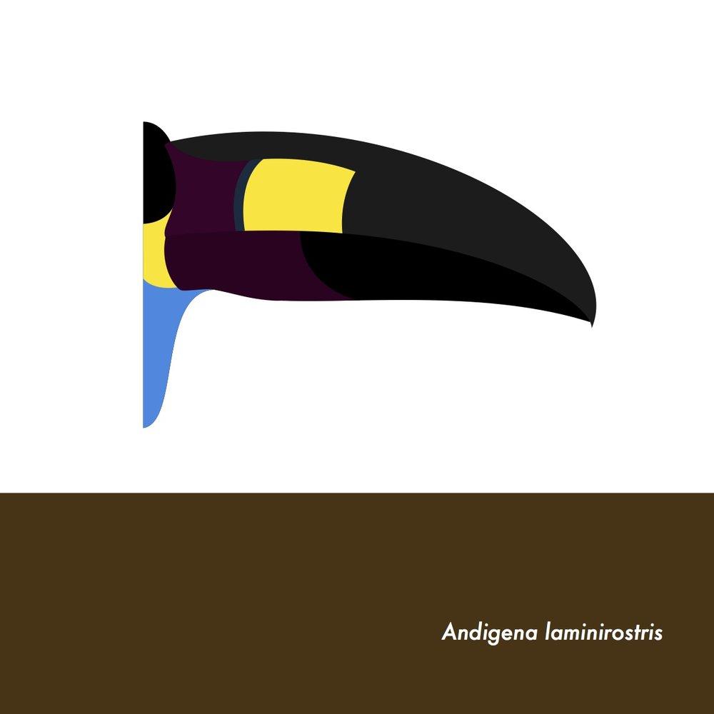 37-AndigenaLaminirostris.jpeg