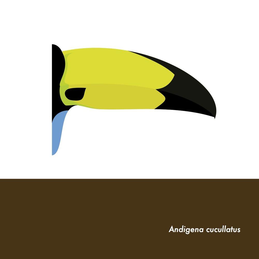 39-AndigenaCucullatus.jpeg